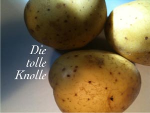 tolle_knolle