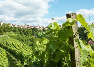 (c)Rothenburg Tourismus Service _ABöttger_Wein 8_AB